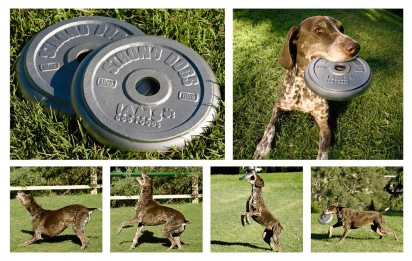 iams_dog_frisbee