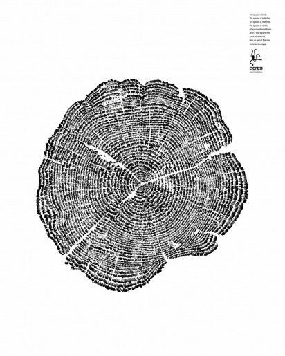 wildlife preservation tree rings large 31978
